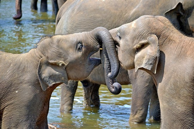 Child-oriented Family tour in Sri Lanka & Beach Holidays - by Minivan - 2 weeks