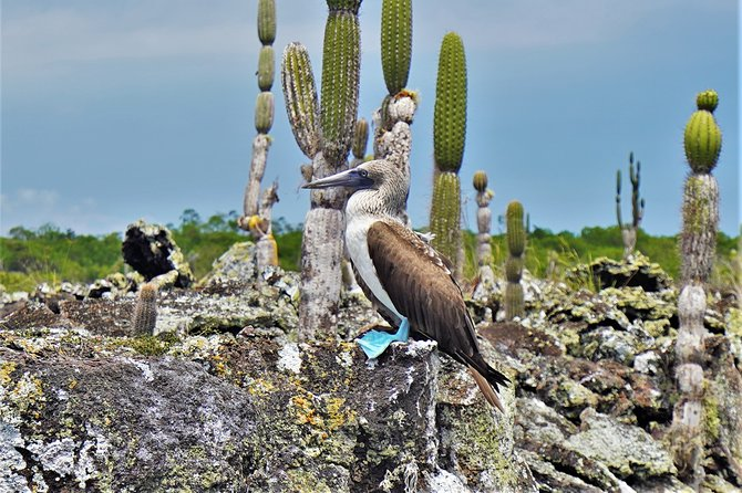 7-Day Galapagos Magic Expedition