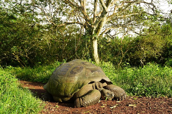 8-Day Galapagos Discovery
