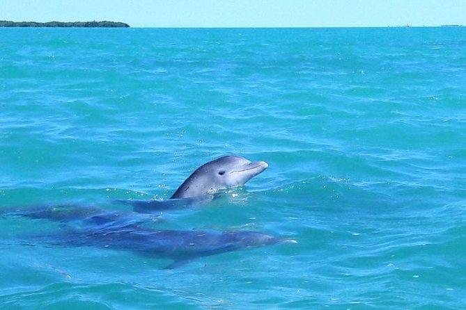 Sian Kaan Biosphere Dolphin Tour