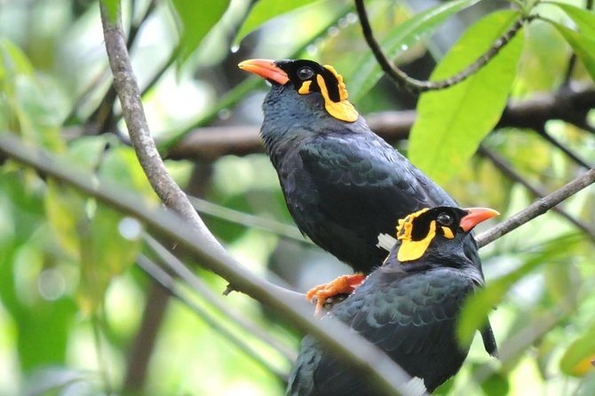 Birdwatching Safari in Udawalawe National Park from Colombo