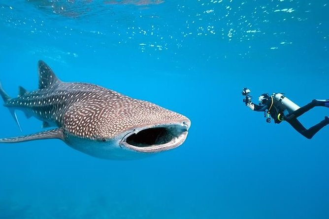 Whale Shark Interaction in Bicol
