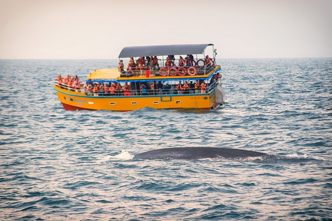 Mirissa Whale Watching One Day Tour