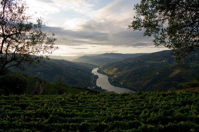 Porto:Douro Valley Wine Private Tour plus Lunch & Wine Tasting