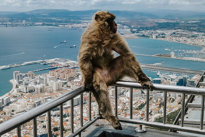 Exciting full day private excursion of Gibraltar