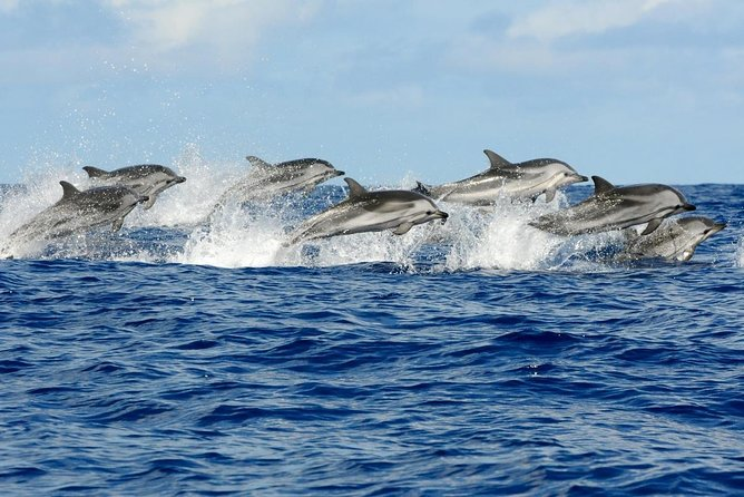 Dolphin watching adventure safari trip from Gibraltar