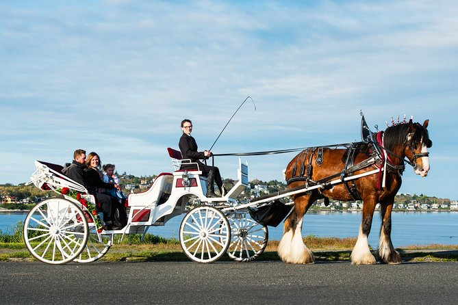 Premier Horse-Drawn Carriage Tour
