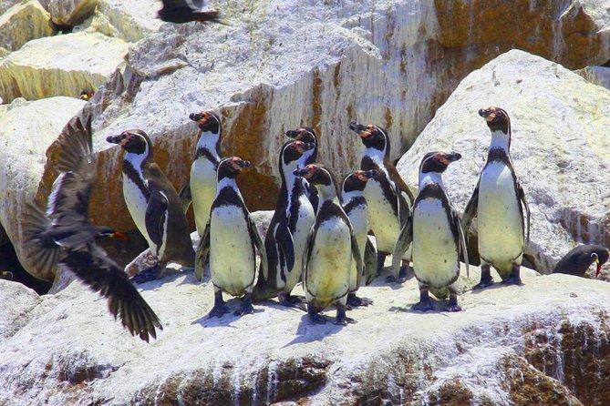 Huacachina Oasis & Sandboarding & Ballestas Islands - from Lima (Small Group)