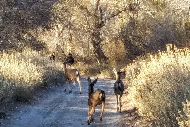 Deer in the preserve