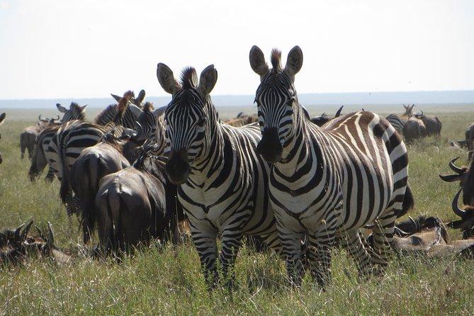 9 Days Great Northern Safari, Cultural and Usambara Mountain Trekking