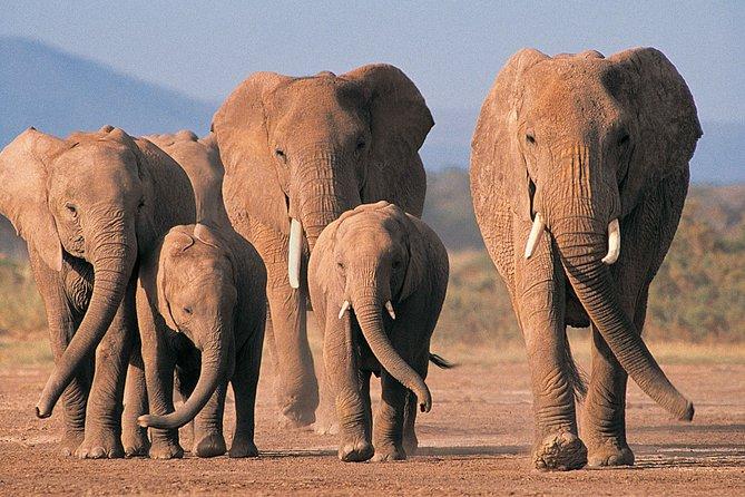 2 Day Safari Isimangaliso Wetland Park & Hluhluwe Imfolozi from Durban