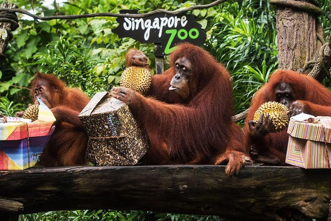 Singapore Zoo Ticket with Return Transfer