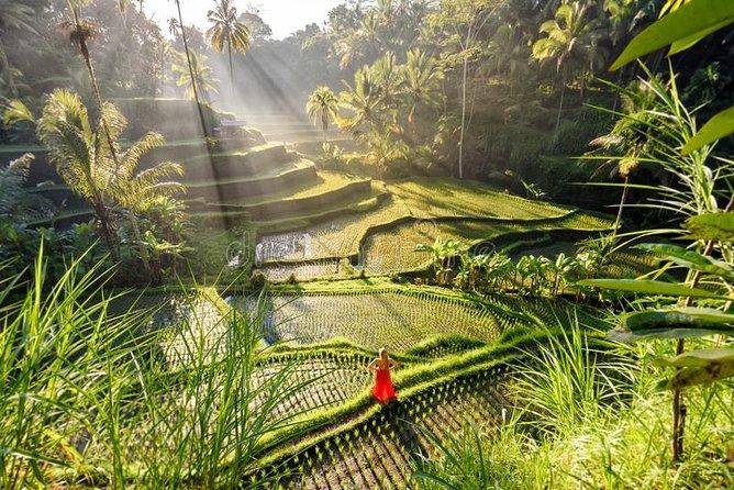 Private Tour - Bali ATV Ride Rice Terrace And Jungle Swing