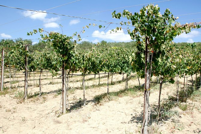 Wine Tour - Wine Stories (Transfer & Lunch Included)