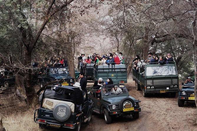 3-Hour Shared Safari in Ranthambore Tiger Reserve