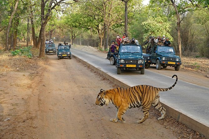 Full Day trip to Ranthambore tiger reserve from Jaipur