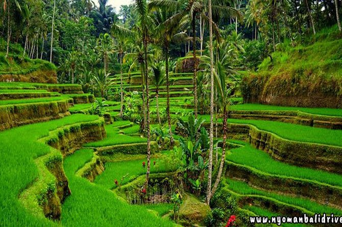 Ubud Tour - Best central one day Tour