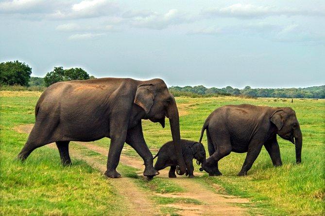 Elephant Explorer Tour from Udawalawe