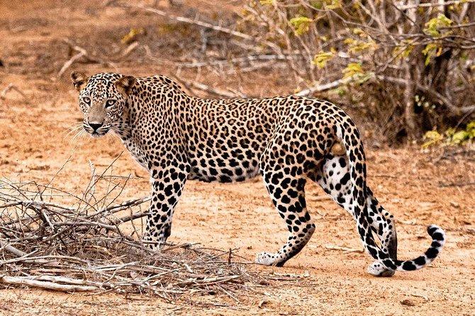 Yala National Park One Day Safari Tour