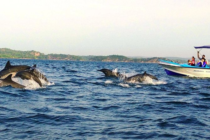Kalpitiya Whale Watching Tour