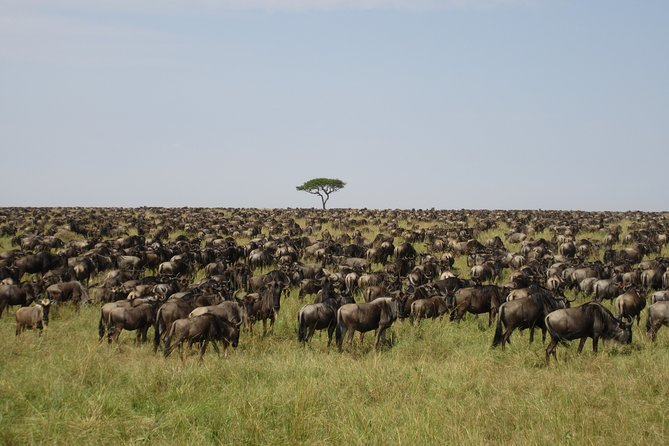 5 Days Tanzania Wildebeest Migration Safari