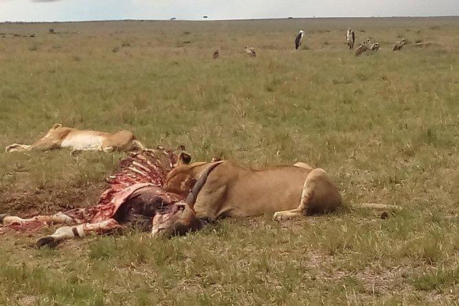 2 Days Safari to Maasai Mara N/R.
