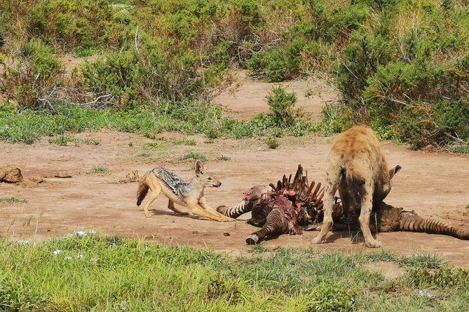 3-Day Samburu National Reserve Private Safari Tour
