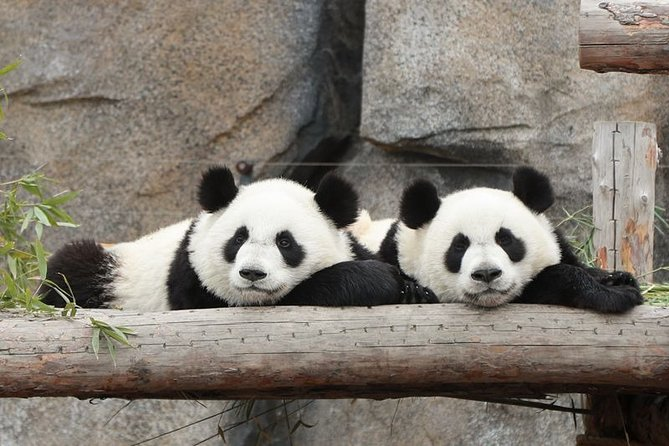 Private Shanghai Layover Tour to Shanghai Wild Animal Park