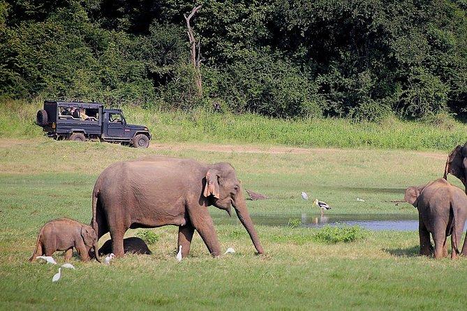 4-Day Safari Tour to Lake Nakuru and Masaai Mara