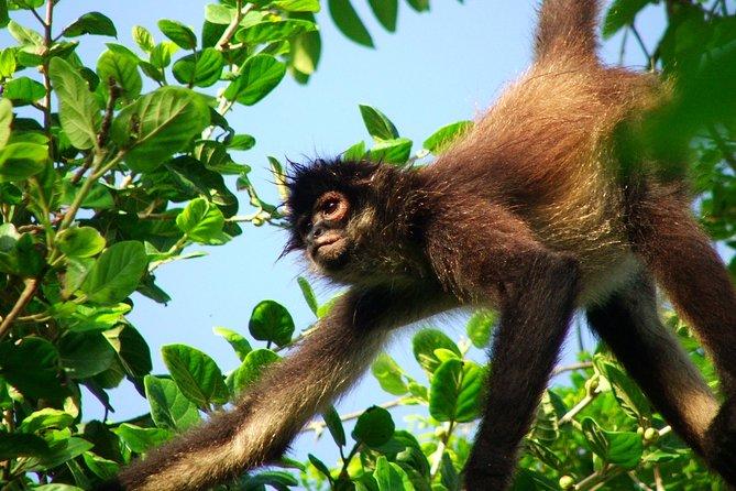 Zip Line Punta Laguna Monkey Sanctuary