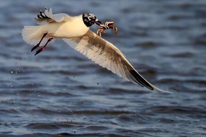 Qinhuangdao 2-Day Self-Guided Birding Tour from Beijing with Private Transfer