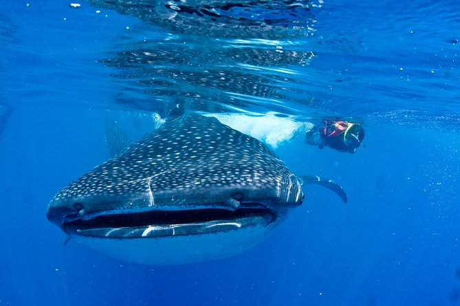 Whale Shark + ONE NIGHT OVERSTAY