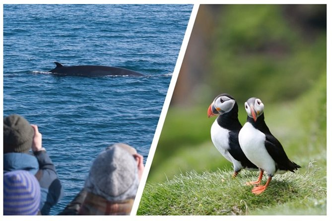 Reykjavík two-in-one: Whales & Puffins