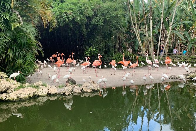 Skip the Line: Flamingo Gardens Admission Ticket in Fort Lauderdale