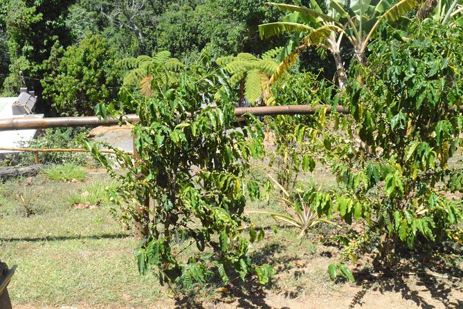 Aguas Buenas Agricultural Paradise Tour