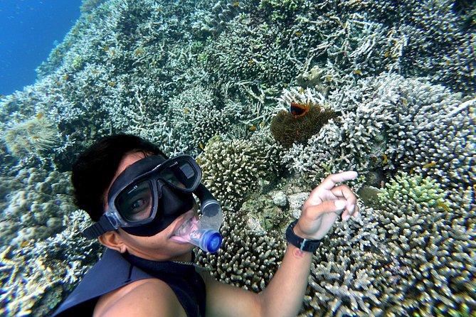 Pamilacan Island Snorkeling & Dolphin Watching Tour in Panglao Bohol