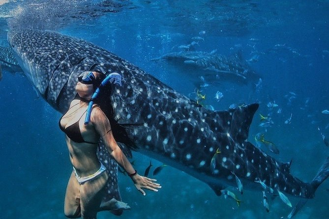 Whale Shark Tour in Bohol with Pangas Falls and Buffet Lunch