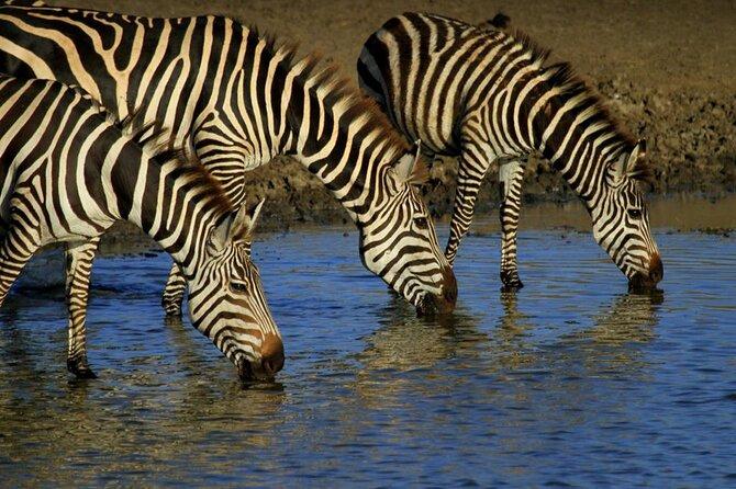 Tarangire, Serengeti National Park & Ngorongoro Crater | 6 Days
