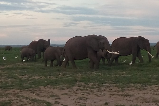 10 Days Safari to Maasai mara N/R Serengeti N/P, Ngorongoro,Manyara Amboseli N/P