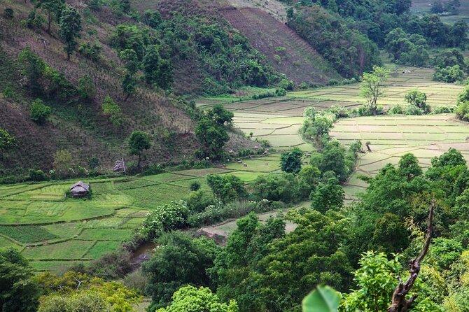 Full Day Trek Tea Plantion from Pindaya