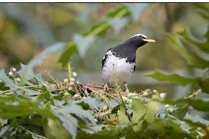 Birdwatching Forest Trek in Kitulgala from Mount Lavinia