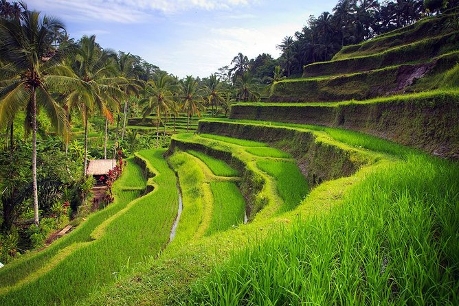 All Ticket Inclusive Of Ubud Tour: Nature, Culture, Heritage and Temples