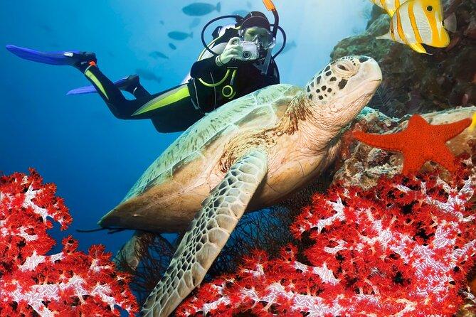 Discover Scuba Diving in Bentota