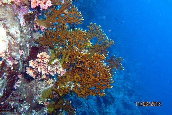 Semi Submarine Underwater Tour from Hurghada, Safaga, Soma bay, Makadi, Elgouna