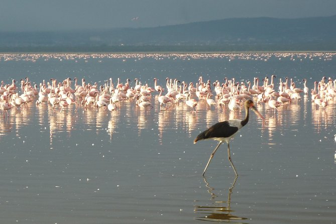 3 Days Safari to Lake Bogoria N/R and Lake Nakuru N/P.