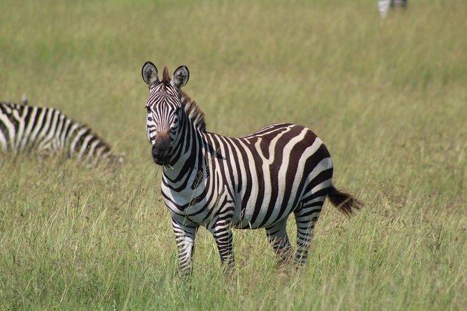 3 Days Safari Tour in Lake Manyara and Ngorngoro