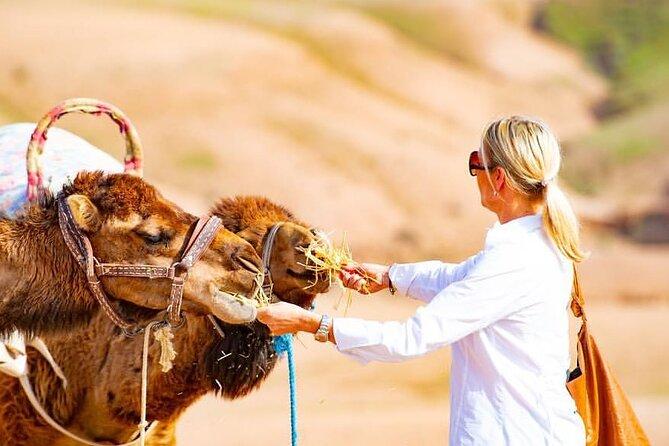 Premium Agafay Desert & Berber villages with Camel Safari Including Lunch