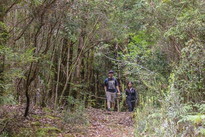 Tour Reserva Bosque Piedra