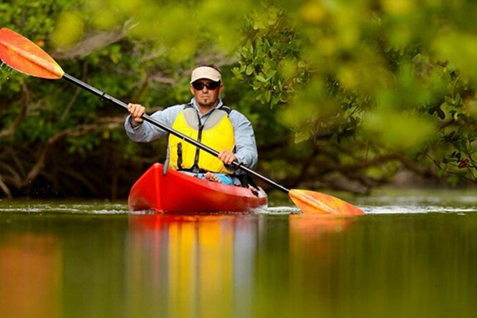 Kayak Tour in Mangrove Isla Damas Quepos Manuel Antonio