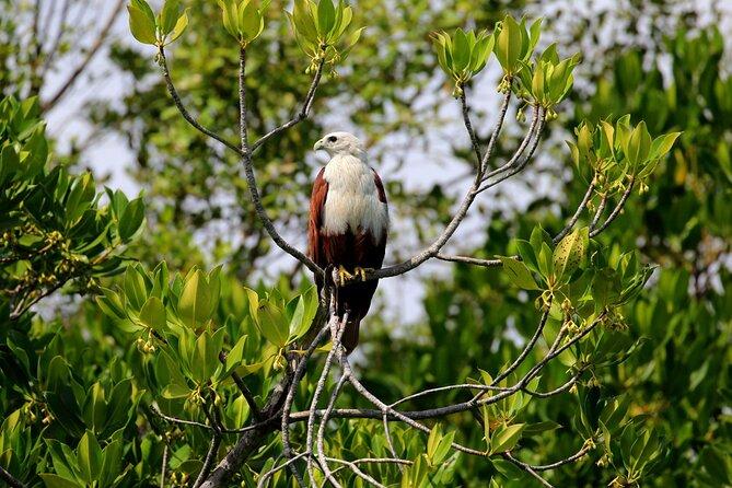 Birdwatching Walk in Anawilundawa Sanctuary from Kalpitiya